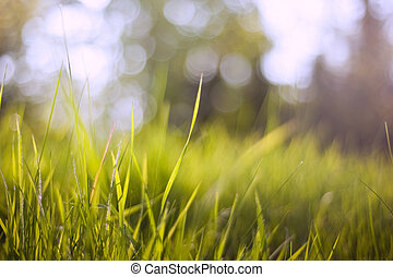 Background of lush green grass blades with defocussed bokeh...