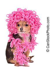 Chihuahua puppy wearing knitted curly pink hat and scarf...