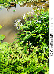 Little pond with ferns and flowers