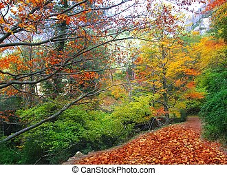 autumn fall beech forest track yellow golden leaves