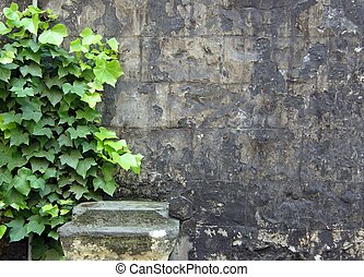 Old wall with ivy and pedestal - Old grey wall with green...