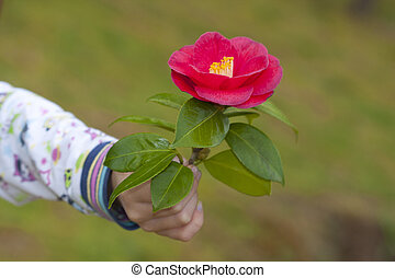 hands of children giving flowers as a symbol of friendship and love