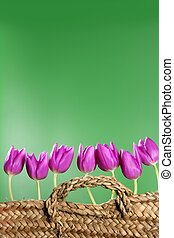basket pink tulips flowers in a row group line