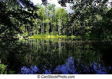 Scarborough marshland - Marsh land in Scarborough Maine at...
