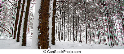 Rock Cut State Park - Illinois - Snow covers a pine forest...