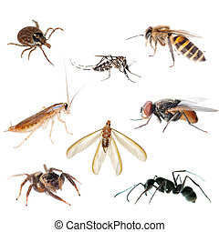 animal, inseto, erro