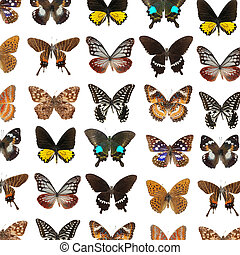 lepidoptera butterfly background