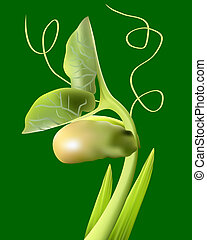 bean sprout on a green background