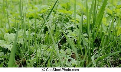 Grass - grass