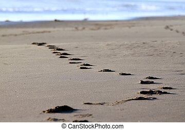 beach footsteps - Footsteps at the beach in the sand with...