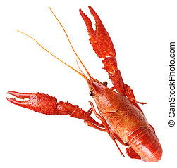 fervido, lagostim