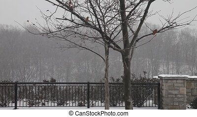 Heavy snow storm in the park, hd