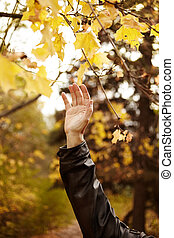 golden age - Hand of the man deep with autumn...