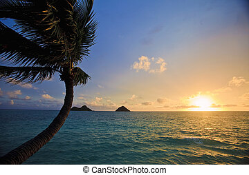 pacific sunrise with islands and palm tree i