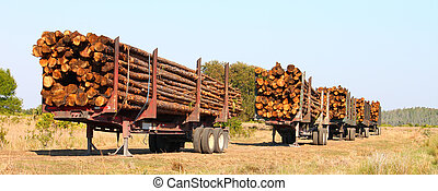 Logging Trailers - Florida - Trailers full of pine logs from...