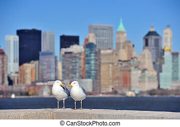 Seagull stands with New York City Manhattan skyscraper...