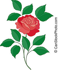 Rose flower - isolated flower of a rose with green leaves...