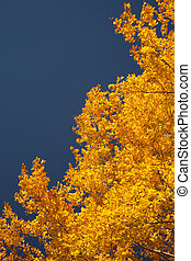 Bright autumn foliage of the trees against the sky