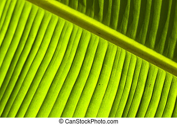 banana leaf detail (1)