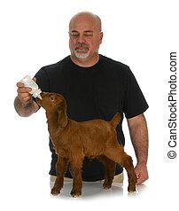 farmer bottle feeding baby goat