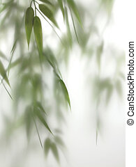 Bamboo Spa Mist - Fresh bamboo sprigs appear misty behind a...