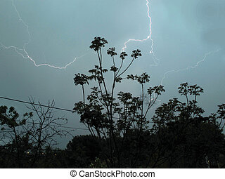 electrical storm after the trees of a garden at dusk