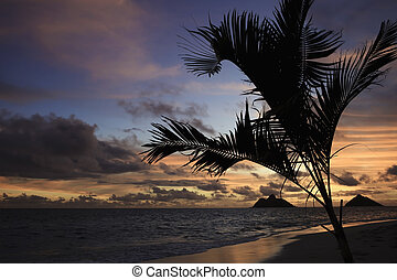 Pacific sunrise in Hawaii with palm tree