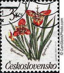 Tigridia pavonia - CZECHOSLOVAKIA - CIRCA 1990: A post stamp...