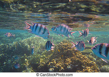 colorful fish - lots of colorful fish on a coral reef in the...