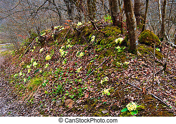Early spring 2 - Somewhere in the forests of Jgheabu, near...