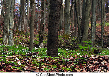 Early spring 5 - Somewhere in the forests of Jgheabu, near...