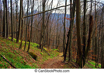 Early spring 15 - Somewhere in the forests of Jgheabu, near...