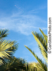 tropical holiday relaxation (1) - palm leaves with blue sky...