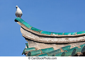 sea gull sitting on top of chinese temple