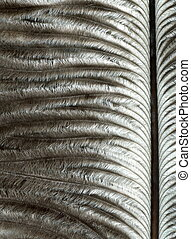 quill - high magnification feather