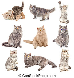Cats - Collection of a cats in different poses isolated over...