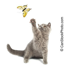 British kitten - Cute kitten playing with a butterfly