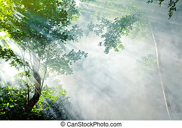 tropical forest sunbeam - morning sunbeam in tropical fairy...