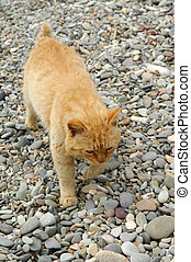 cat is on the stony ground - striped ginger cat is on the...