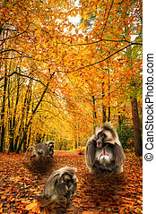 Baboons in beautiful Autumn Fall forest scene - Beautiful...