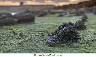 Volcanic rocks of Tarifa