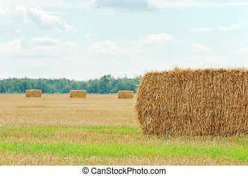 fresh cut straw in a field