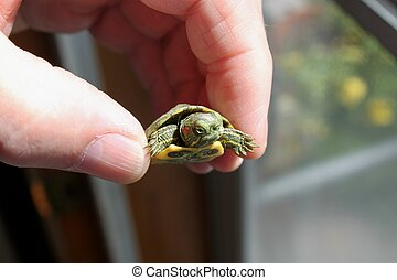 Baby Turtle - We found this little Turtle in our front yard....