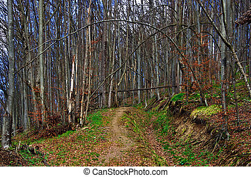Early spring 23 - Somewhere in the forests of Jgheabu, near...