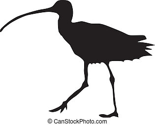 curlew - silhouette of curlew