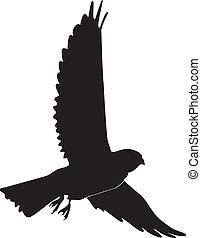 kestrel - silhouette of kestrel