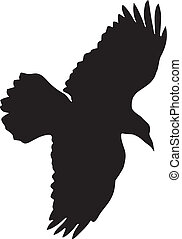 raven - silhouette of raven