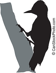 woodpecker - silhouette of woodpecker