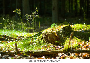 The stump - Old, mossy tree stump in green, sunlit forrest...