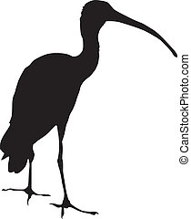 ibis - silhouette of ibis
